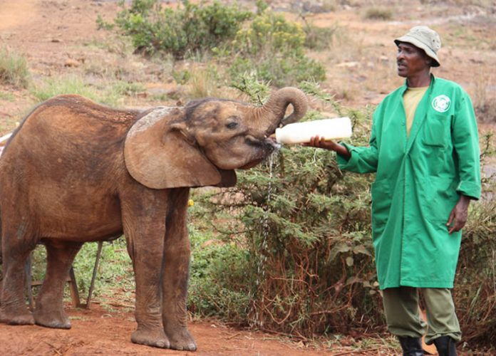Elephant Conservation in Africa